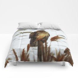 Northern Harrier Comforters
