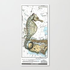 The Little Seahorse Canvas Print