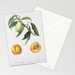 Apricot (Pesca Natalina) from Pomona Italiana (1817 - 1839) by Giorgio Gallesio (1772-1839) Stationery Cards