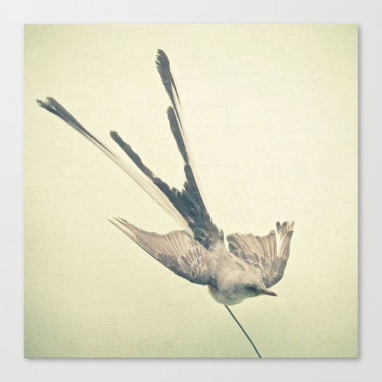 Bird Study #1 Canvas Print