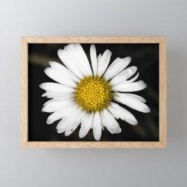 White daisy floating in the dark #2 Framed Mini Art Print