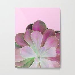 Acid Green and Pink Echeveria Metal Print