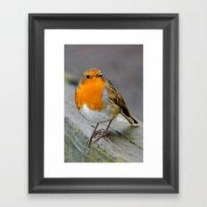 Cheeky Robin  Framed Art Print
