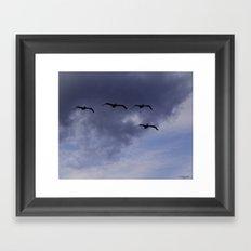 Four Pelicans Framed Art Print