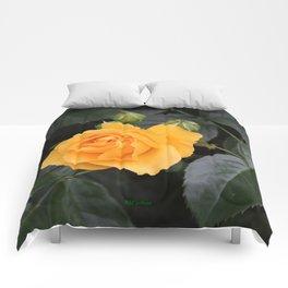 "A Rose Named ""Julia Child"" Comforters"