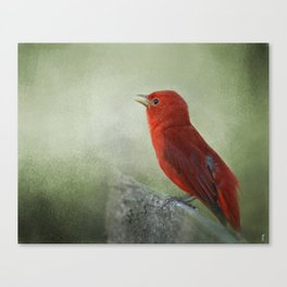 Song of the Summer Tanager 3 - Birds Canvas Print