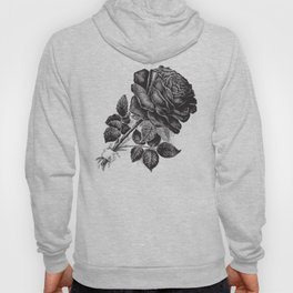 Engraved Rose Illustration Hoody