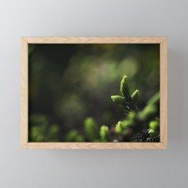 Evergreen Framed Mini Art Print