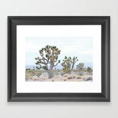 joshua tree 02 Framed Art Print