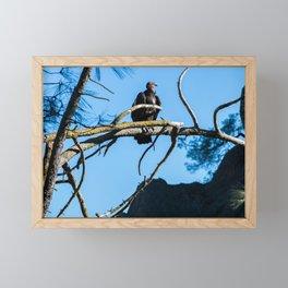 Back from the Brink (California Condor) Framed Mini Art Print