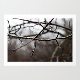 branches and rain Art Print