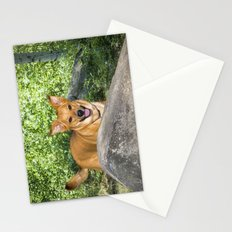 My Duke Stationery Cards