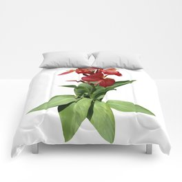 Red Canna Lily Comforters