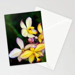 Pretty Plumeria, Hawaii's Flower Stationery Cards