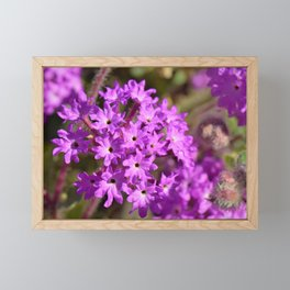 Sparkle Purple Petals by Reay of Light Photography Framed Mini Art Print