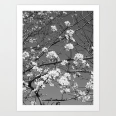Places in Black & White: Plum Tree 1 Art Print