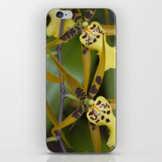 Sunny Orchid iPhone & iPod Skin