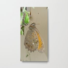 Meadow Brown Butterfly Feeding On Aphids Metal Print