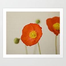 Poppy Flower Red Orange Yellow Bloom Art Print
