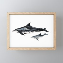 Rough-toothed dolphin (Steno bredanensis) Framed Mini Art Print