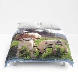 Ewe and Twin Spring Lambs Comforters