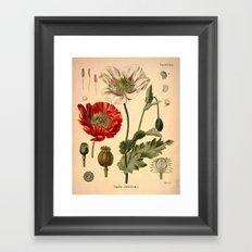 Botanical Print: Poppy Flower / Papaver Framed Art Print