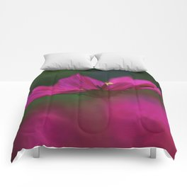 Grace of a Cosmo Comforters