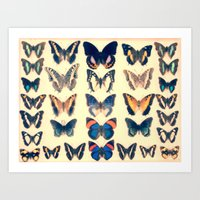 Cased Collection of Exotic Butterflies Art Print