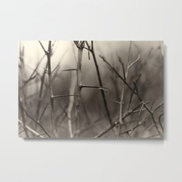 Thorns Metal Print