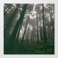 Looking Up Into The Fog Canvas Print