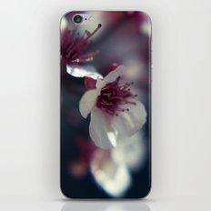 Plum Blossom iPhone & iPod Skin