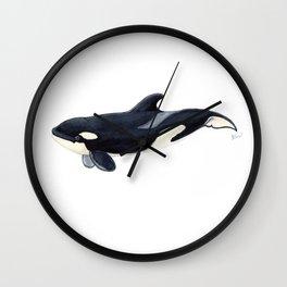Baby orca Wall Clock