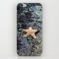 Starfish - La Push iPhone & iPod Skin