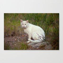 Wild White Cat 435 Canvas Print