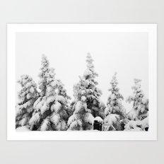 Snow Covered Pines Art Print