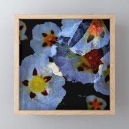 Esteva - Cistus Framed Mini Art Print