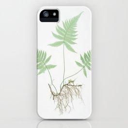 Botanical Beech Fern iPhone Case