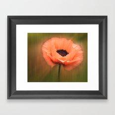 Soft Pink Poppy Framed Art Print