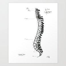 Anatomical Human Spine Art Print