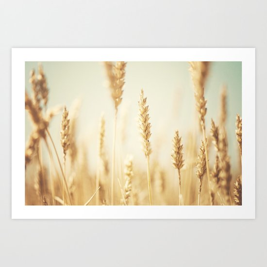 the cornfield ... Art Print