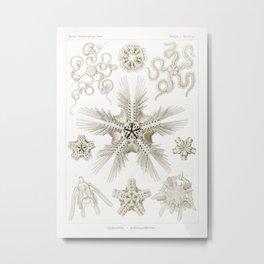 Ophiodea–Schlangensterne from Kunstformen der Natur (1904) by Ernst Haeckel.2 Metal Print