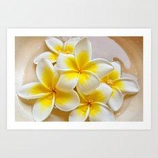 Plumeria Blossoms Art Print