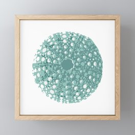 Sea Urchin Kina Framed Mini Art Print