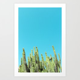 Desert Cactus Reaching for the Blue Sky Art Print