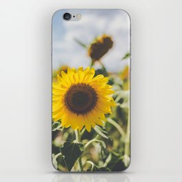 Allora | Sunflowers iPhone Skin