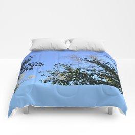Baby blue Comforters