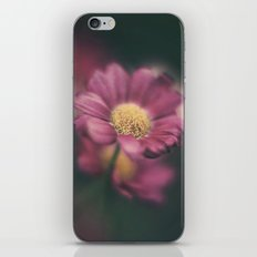 Daisy' iPhone & iPod Skin