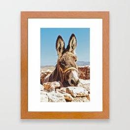 Donkey photo Framed Art Print