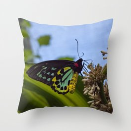 The Birdwing Butterfly Throw Pillow