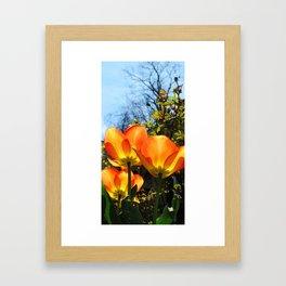 Yellow and Orange #1 Framed Art Print